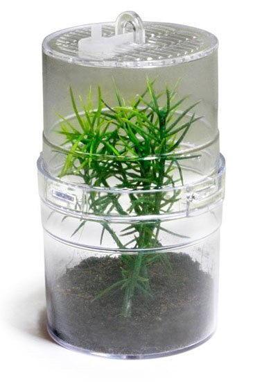 Лаки Рептайл Террариум-инсектариум Critter Box, 6*11 см, пластик,  Lucky Reptile