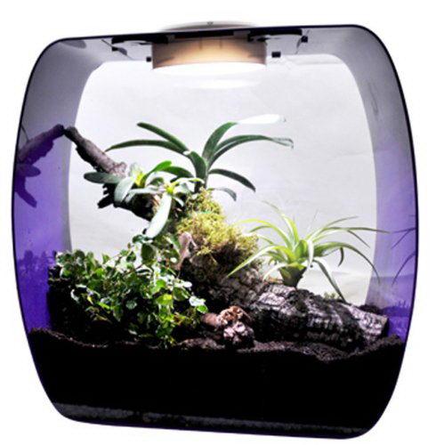 Лаки Рептайл Террариум-флорариум Life Box, в ассортименте, Lucky Reptile