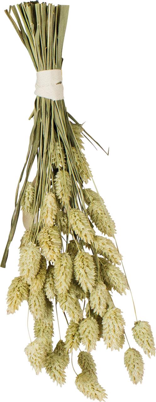 JR Farm Ветка канареечного семени для птиц, 20 г