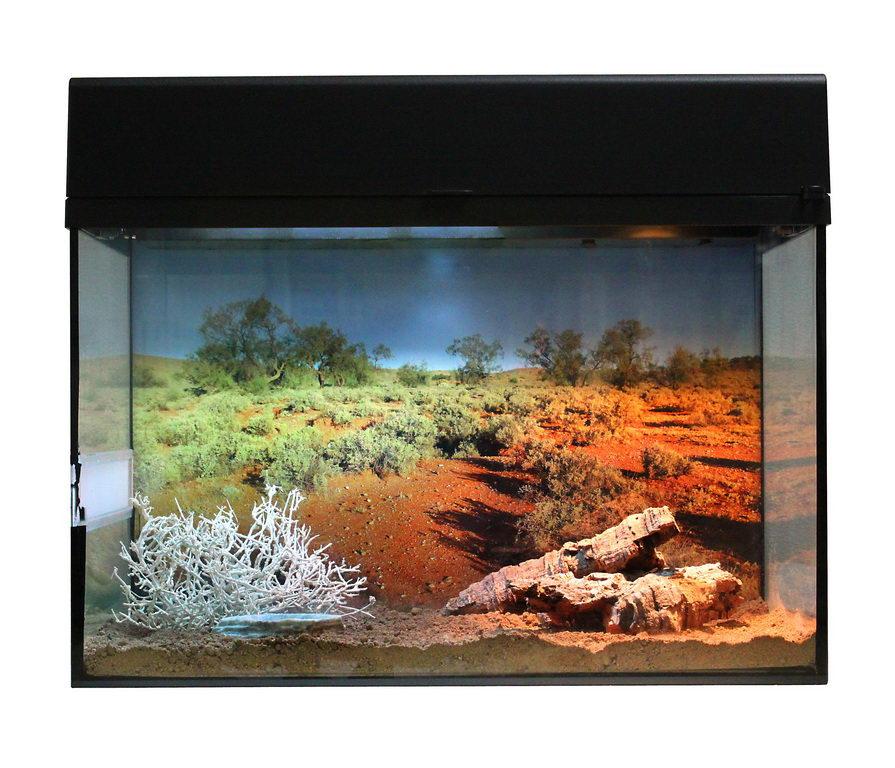 Лаки Рептайл Террариум Стартовый комплект для Гекконов, 50*28*40 см, в ассортименте,  Lucky Reptile