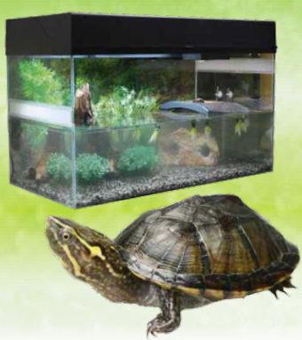 Лаки Рептайл Террариум Стартовый комплект для водных черепах, черный, 80*40*52 см, Lucky Reptile