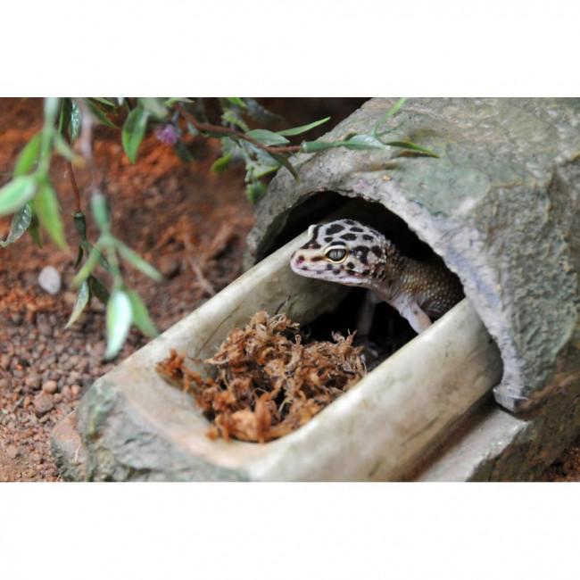 Лаки Рептайл Укрытие для рептилий MultiBox, в ассортименте, 45*25*23 см, Lucky Reptile