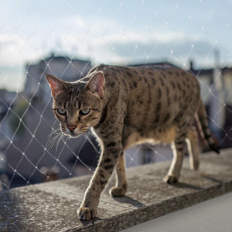 """Дуво+ Сетка на окно защитная """"Кошка на выгуле"""", в ассортименте, DUVO+"""