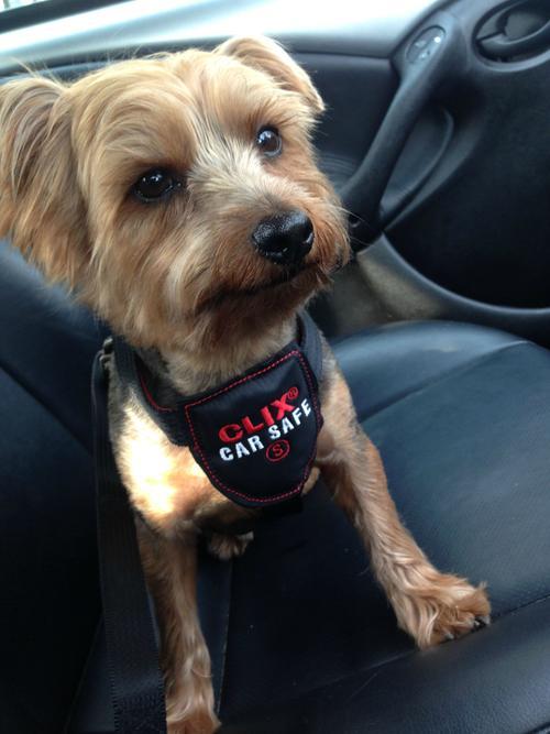 Шлейка для собак автомобильная CLIX CarSafe с ремнём безопасности, в ассортименте, чёрная, Company of Animals