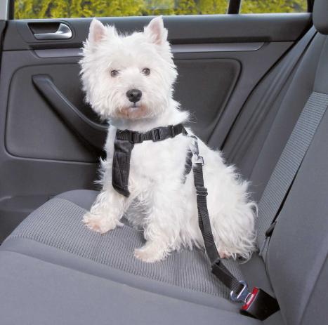 Трикси Ремень безопасности в автомобиль со шлейкой, в ассортименте, черная, Trixie