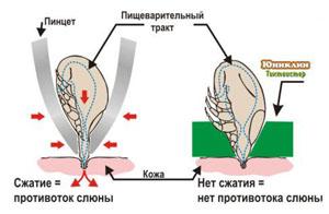 Юниклин Приспособление для удаления клещей (Выкручиватель клещей) Tick Twister (Тик Твистер), 2 шт/уп., Uniclean, Франция