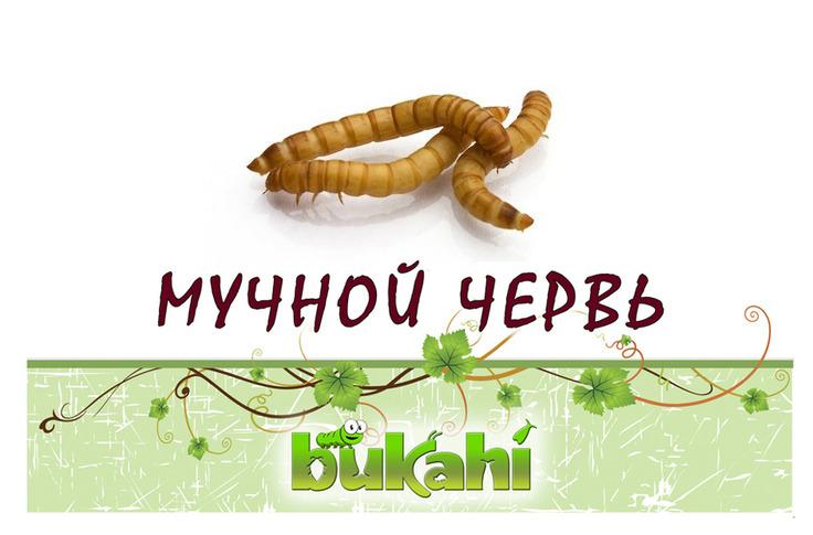 Букахи Сушеный мучной червь для насекомоядных, в ассортименте, Bukahi