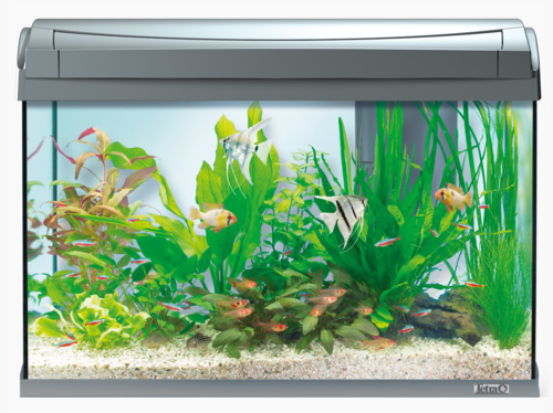 Tetra Аквариум AquaArt Discover Line, объем 60 л, 61*33,5*42,7 см, цвета в ассортименте, Тетра