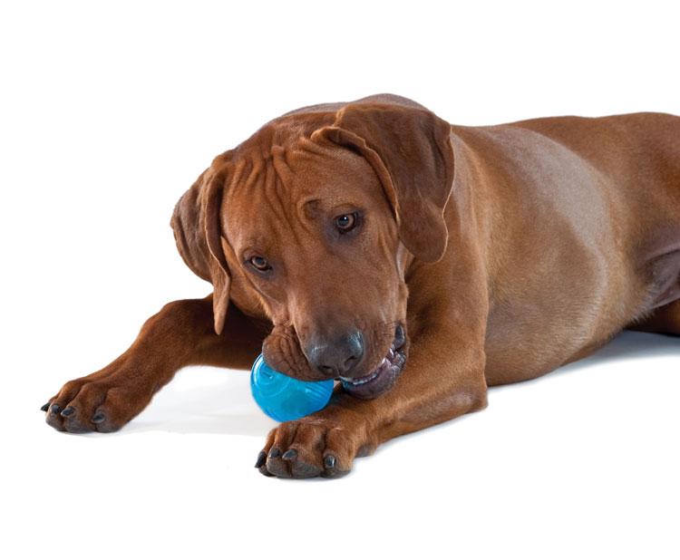 """Петстейджес Игрушка для собак """"ОРКА теннисный мяч"""", диаметр 7 см, Petstages"""