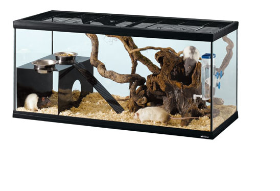 Ферпласт Клетка-террариум Itaca (Ratatout) 80 для мышей, джунгариков, хомяков, черепах, змей, 81*36*46 см, объем 110 л, Ferplast