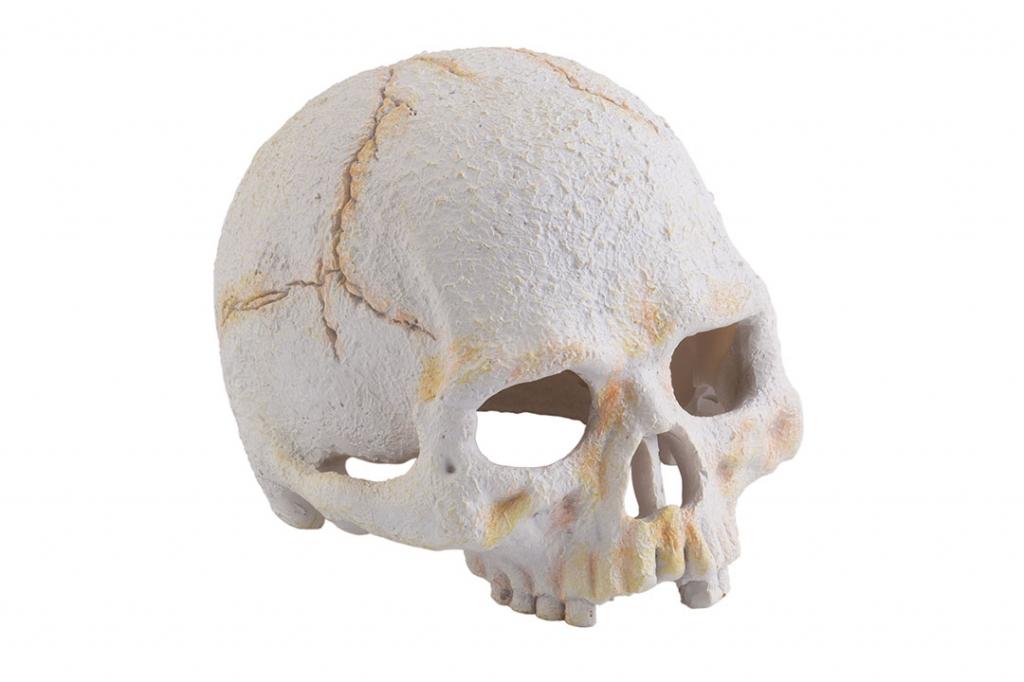 "Экзо Терра Убежище-декор для террариума ""Череп примата малый"" Exo Terra Primate Skull, Exo Terra"