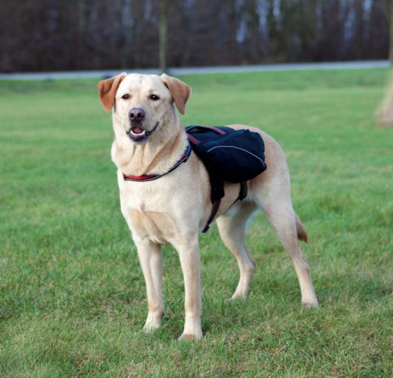 Трикси Вьючная сумка-шлейка для собак, черный, в ассортименте, Trixie