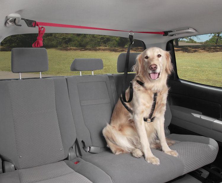Солвит Крепление для собак в машине (ремень и поводок), 183*2,4 см, Solvit Products