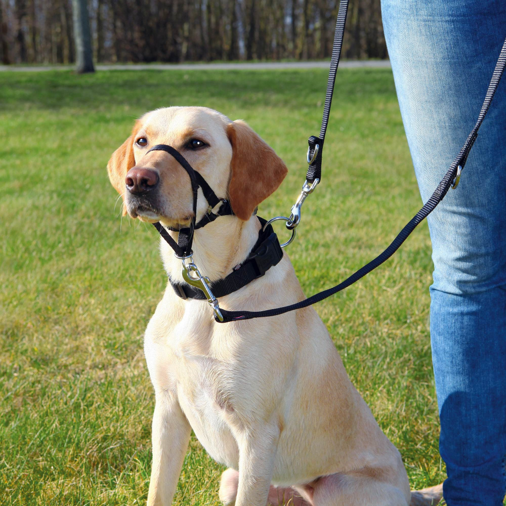 Трикси Намордник тренировочный для собак, в ассортименте, Trixie