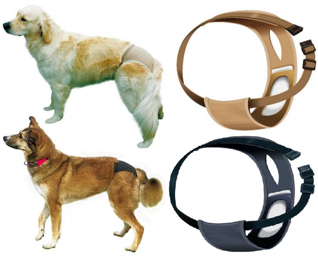Трикси Защитные штанишки (трусы гигиенические) Люкс для собак, в ассортименте, Trixie