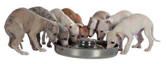 Трикси Стальная миска для щенков с выступом, в ассортименте, Trixie