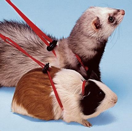 Ферпласт Регулируемая шлейка серия NY для животных, 3 размера, Ferplast