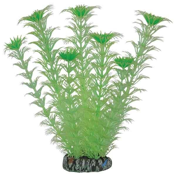 Лагуна Растение Амбулия светящееся для аквариума, 20 см, Laguna